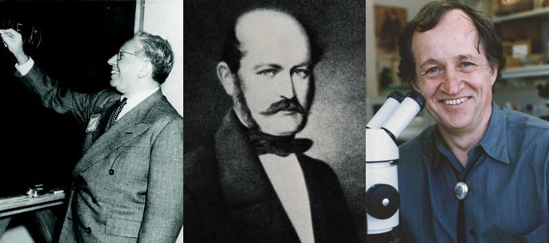 Három tudós, akik máshogy gondolkodtak